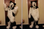 Jack the Cat - Fursuit by DarkieKun by Koiice