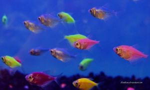 Stock - Glofish (Skirt Tetras) 11 by Pendlera