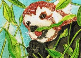 13-083 Red Panda by Artistically-DE