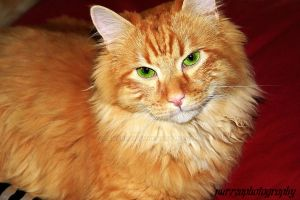 My Grown Up Lion by amandaWAY