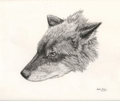 charcoal wolf by rokhead423
