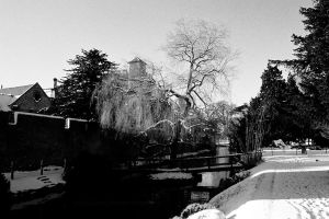 Winter Willow by EarthHart