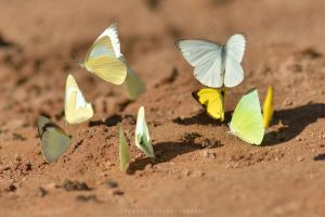 Beach Butterflies by drewhoshkiw