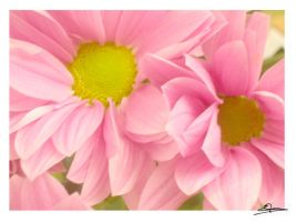 Pink flower 6 by x-miss-drawings-x