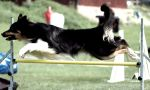 Agility and Random dogpics. by Stiernstedt
