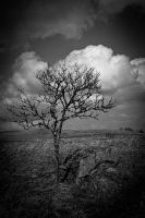 Solitary tree by LiberiusS