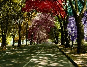 Colored Trees by Atlantagirl