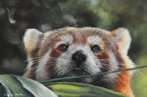 Red Panda (Pastel Pencils) by AngelaMaySmith