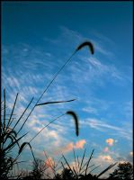 Grass and Sky by bamako