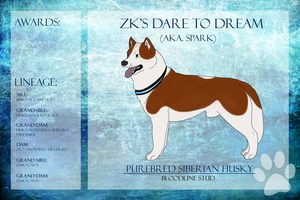 SDCh ZK's Dare To Dream SDU NA Ref Sheet - REHOMED by xMush-Kennelsx