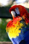 Colorfull Macaw by cRomoZone