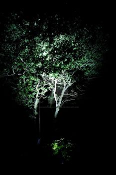 Torch Experiments #3 - Trees by Paranormal-Hyperbola