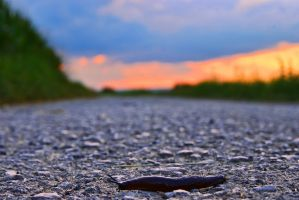 Little snail in a big world by JoInnovate
