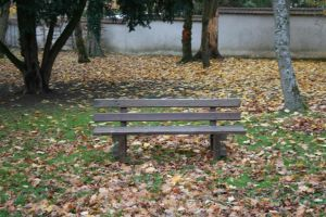 A Bench by Cat-in-the-Stock