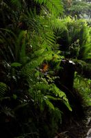 Ferns by Armathor-Stock