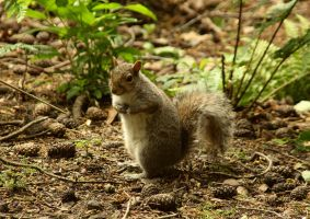 Little Forest Squirrel by SquirrelGirl111