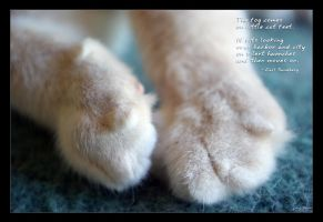 Little Cat Feet by tonydicks