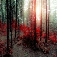 burn by ildiko-neer