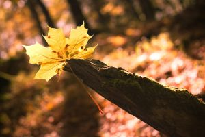 Herbst by man-of-faith