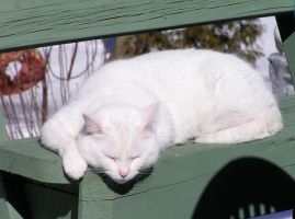 Cat Sleeping on Deck by loopyker-stock