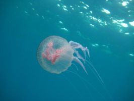 Jellyfish by PapeSgooby