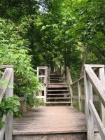Stairs in the Trees 2 by Jenna-RoseStock