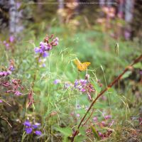 Orange Butterfly by DREAMCA7CHER