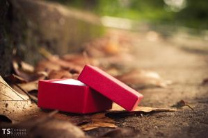 Little Red Box by Tom-Stokes