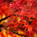 City Lights by Ymntle-Aleoni
