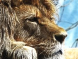 lion edit by uktilly