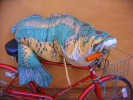 Fish on Bicycle by DVanDyk
