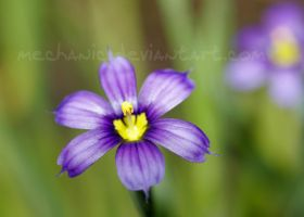 Violet n Yellow by mechanic