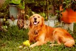 Achilles my friend and love~ by Hyb666