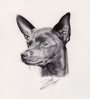 Chihuahua by DefiantArtistry