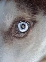 1st Photoshop Pic: Kody's Eye by lucidcoyote