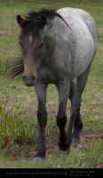 Bay Roan Yearling 1 by SalsolaStock