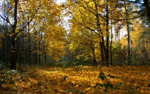 Bed Of Leaves by drdrevil