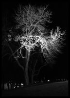 Glowing tree by smeghead1976