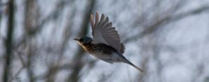 Winter Fly by TurangaLeela