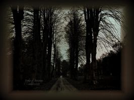 Path of Dreams by MagicBlanche