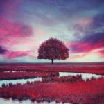 Red Dreams at Twilight by UntamedUnwanted