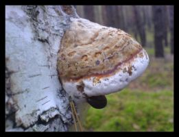 Polyporus by lonely--soldier