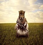 Soldier Squirrel Photo Manipulation by PhotooManipulation