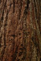 Wood Texture3 by NickiStock