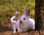 Bunny love by PatriciaVazquez