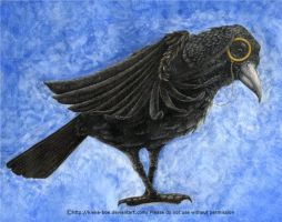 Morlen the Bespectacled Crow by Kieke-boe