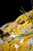 Amoungst the Rocks by Ngenye