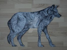 Wolf by Jotnku
