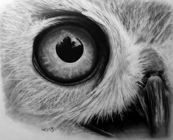Owl Close Up by hg-art
