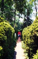 Lost in the Hedges by Scottr5680